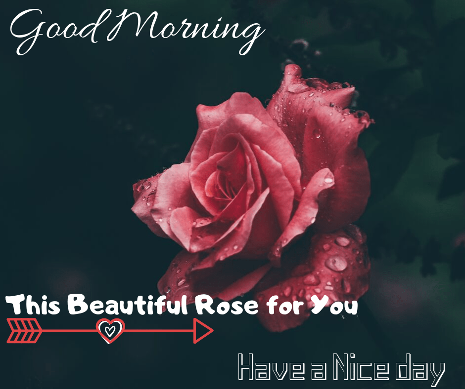 ♥ As every day passes, I discover myself loving you extra. I do know I'll see you tonight, however I simply needed to say good morning.